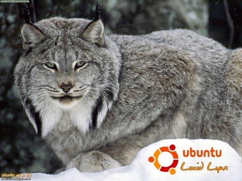 ubuntu lucid lynx 10.04