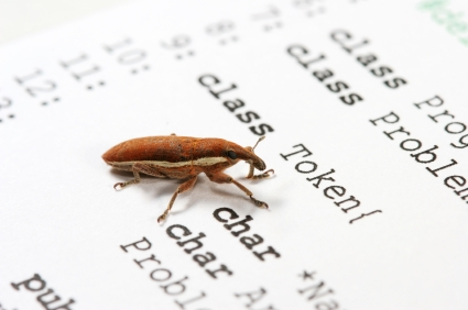Weevil on a computer printout